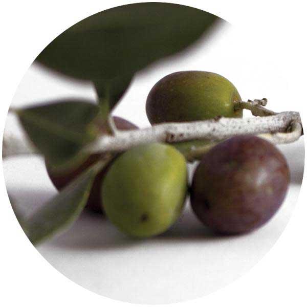 Tapones para aceite y vinagre